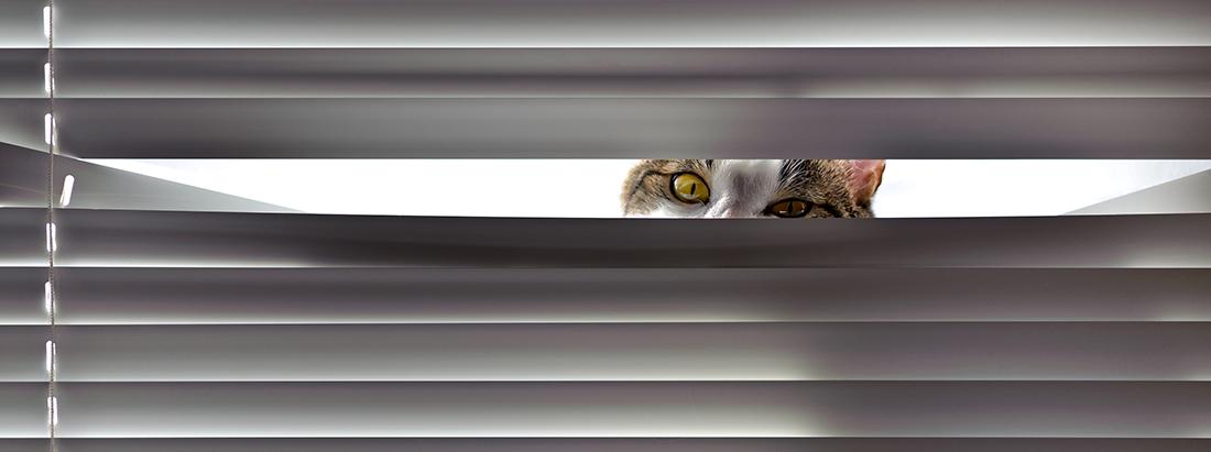 Cat vs blinds