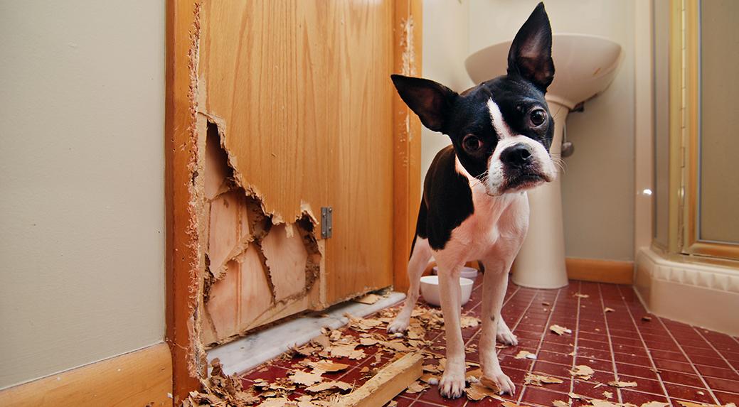 How to dog proof a door
