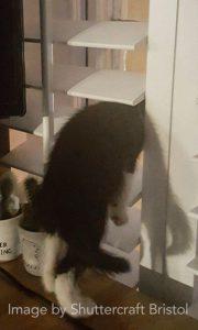 Shutters Investigated by Pet Cat Shuttercraft Bristol
